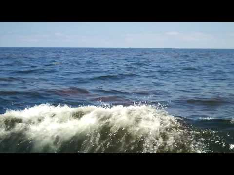 The World: Oil from the BP spill sinks from surface