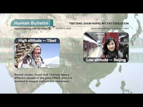 Science Bulletins: Tibetans Show Recent Evolution