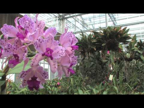 The Orchid Show: Cuba in Flower in the Making - February 4