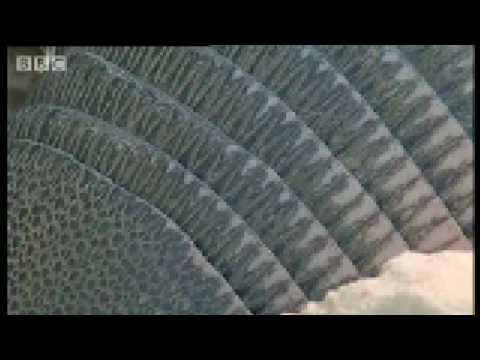 Wooly Mammoth battle! - Wild New World - BBC