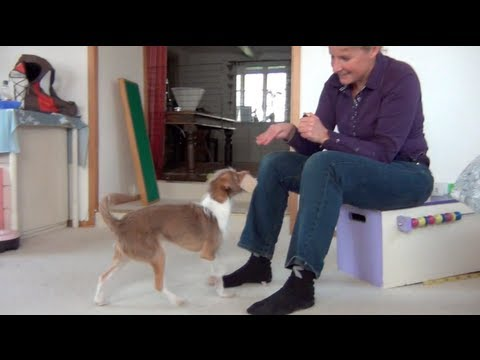 Tug learns obedience retrieve from Brigitte van Gestel!!!- clicker dog training