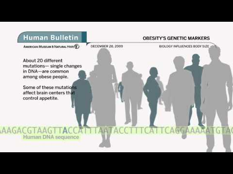 Science Bulletins: Obesity's Genetic Markers
