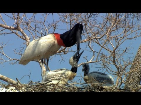 Secret Brazil: Life in a Nest