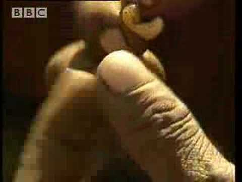 Poison Arrows - Ray Mears Extreme Survival - BBC