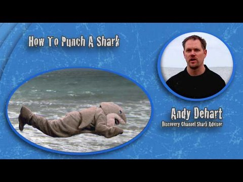 Shark Week 101: How To Punch A Shark