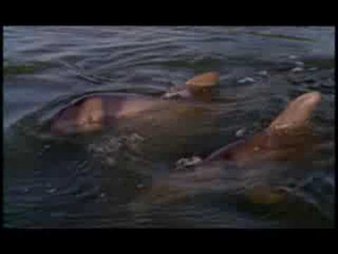NATURE | Wisdom of the Wild | Dolphin Therapy | PBS