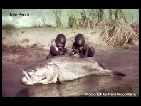 Attack of the Killer Monster Fish