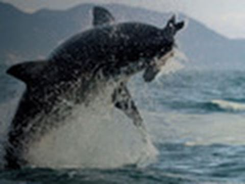 Deadly Instinct: Great White Sharks