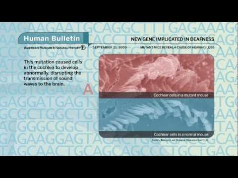 Science Bulletins: New Gene Implicated in Deafness