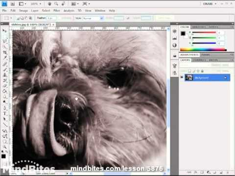 Intro to Photoshop CS4 Lesson 6: Resizing Images