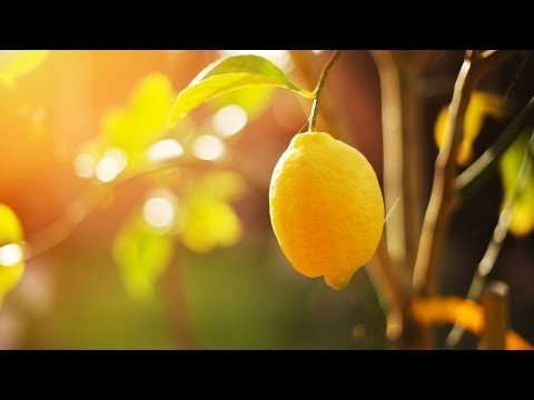 Should You Put Lemon on Your Face? | Natural Skin Care