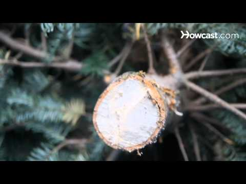 How to Keep a Christmas Tree from Drying Out