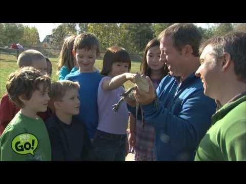 Wild Kratts | Alligator | PBS KIDS GO!