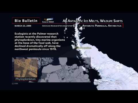 Science Bulletins: As Antarctic Ice Melts, Wildlife Shifts