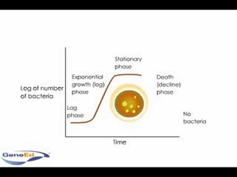 Logarithmic growth of bacteria