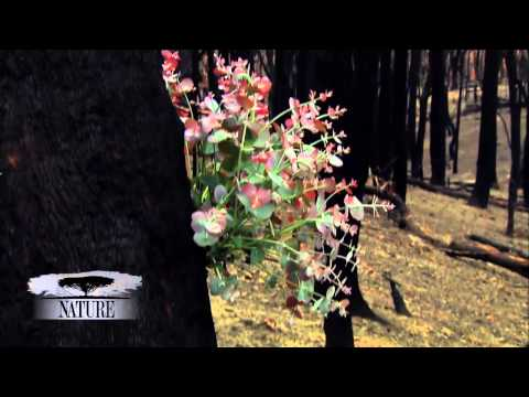 NATURE   Survivors of the Firestorm   The Forest is Green Again   PBS