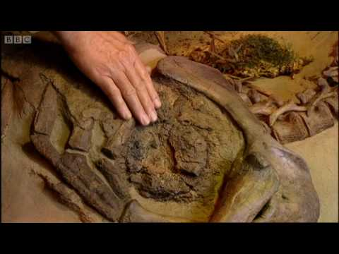 Dinosaur CT scan - Walking with Dinosaurs - BBC