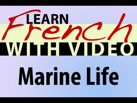Learn French with Videos - Marine Life