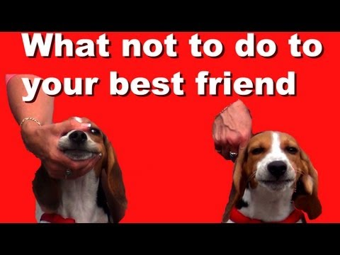 What NOT to do and why- dog training clicker tips