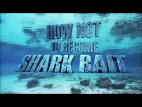 Shark Week 2008!