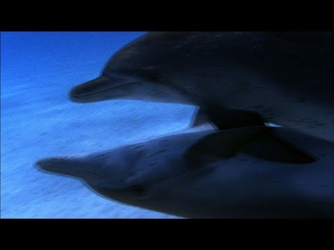 World's Weirdest - Promiscuous Dolphins