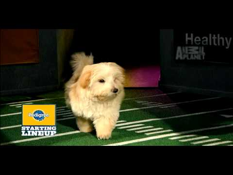 Puppy Bowl VI- Starting Lineup