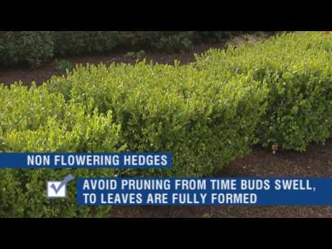 How to Trim Shrubs and Prune Hedges - Do It Yourself