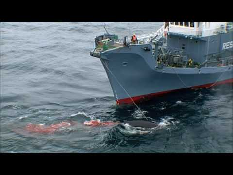 Whale Wars - Sea Shepherds' Point of View