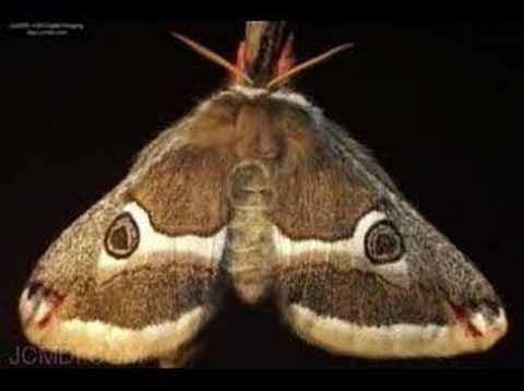 Amazing Moths Animated Slideshow