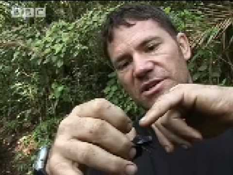 New animals species discovered - Expedition Borneo - BBC wildlife