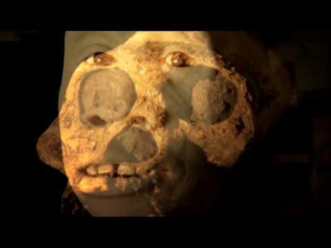 NOVA   Becoming Human (Part 1): First Steps   PBS