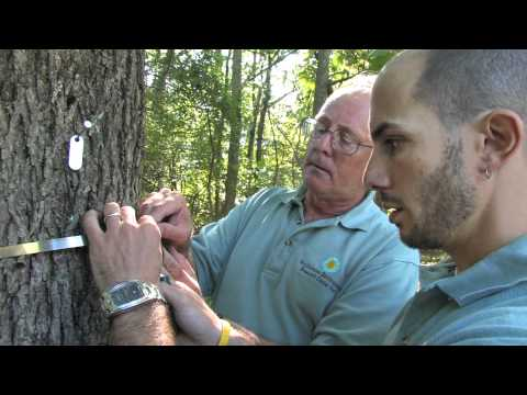 SHOUT Tree Banding Project with the Smithsonian, Tree Setup