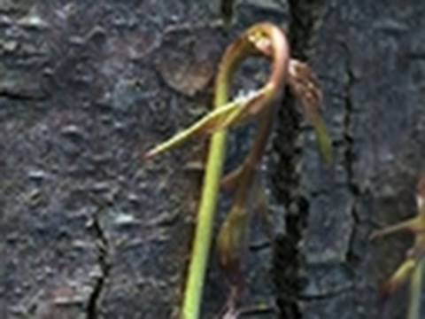 Life - Creeper Plants Climb Trees | Plants