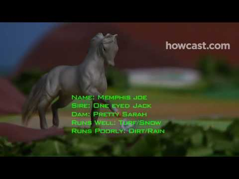 How to Pick a Horse at the Racetrack