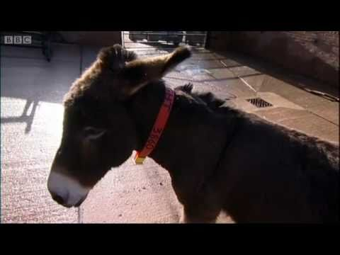 Donkey Escape Artist - Clever Critters - BBC
