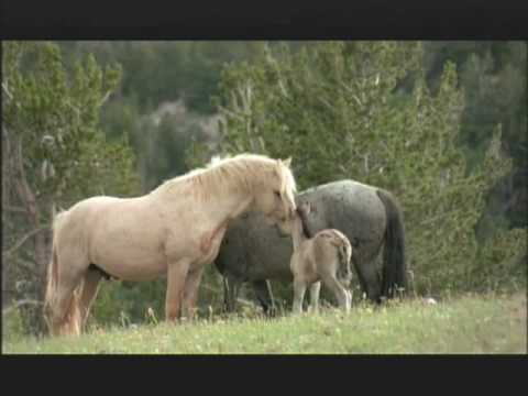 NATURE | Cloud's Legacy: The Wild Stallion Returns| Flint
