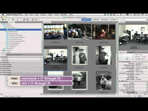 Add ratings to your photos with Adobe Bridge   lynda.com tutorial