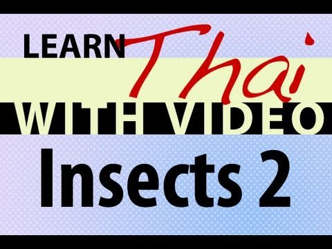 Learn Thai with Video - Insects 2