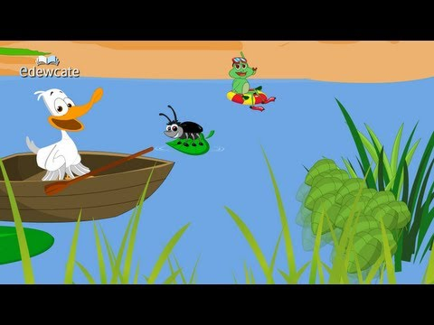 Edewcate english rhymes - A little white duck nursery rhyme