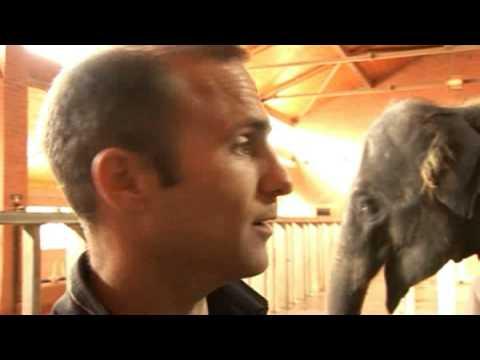 Elephant ultrasound