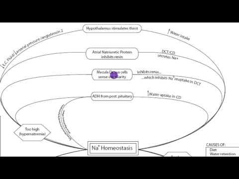 Sodium Homeostasis: Part 2