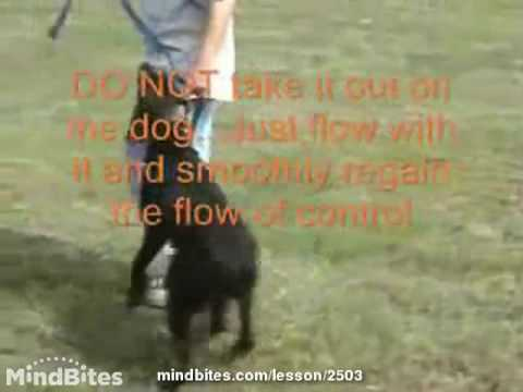 Dog Training - Intro To Training Collar