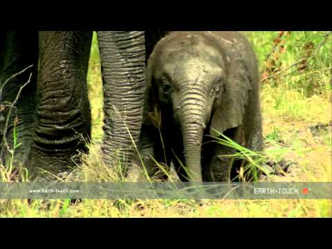 Baby elephants learn life lessons