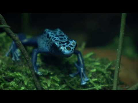 NATURE | Frogs: The Thin Green Line | Preview | PBS
