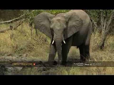 Elephants roll in forest mudbath
