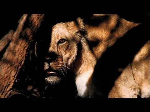 National Geographic Live! - Face-Off with a Lion