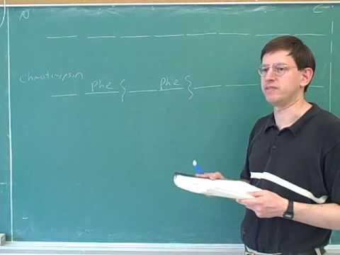 Organic chemistry: Amino acids and peptides (25)