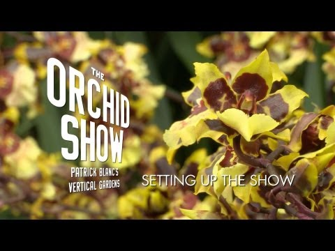 Setting Up The Orchid Show: Patrick Blanc's Vertical Garden
