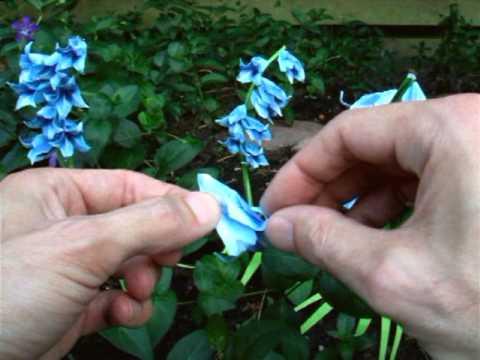 Origami Bluebells