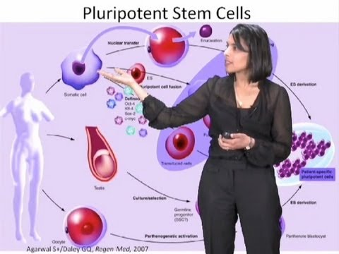 Sangeeta Bhatia Part 1: Engineering Tissue Replacements